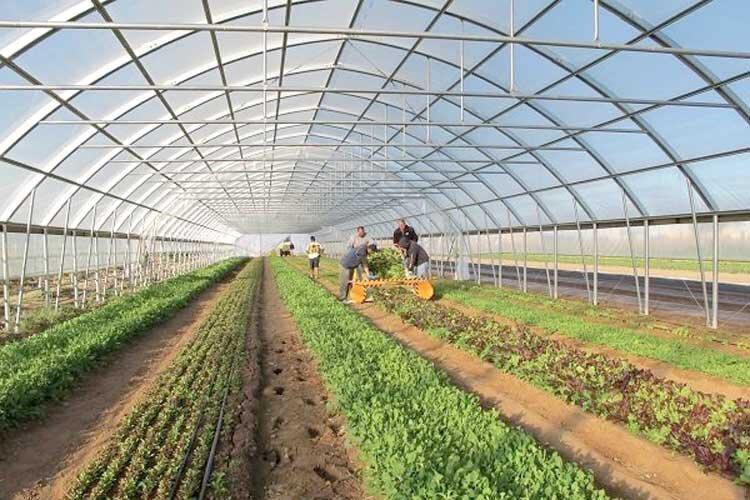 کشاورزی آذربایجان غربی گلخانه نشین می گردد