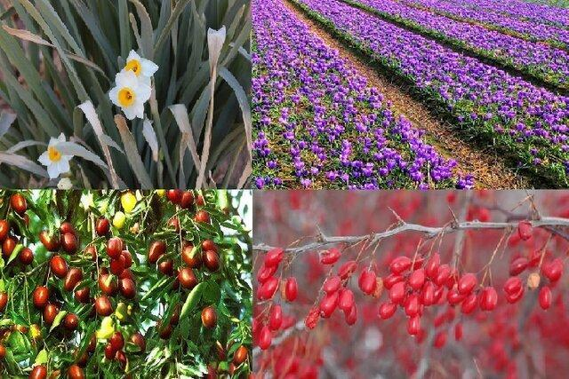 از ضعف فرآوری گیاهان دارویی تا لزوم ایجاد بانک ژن گیاهی در خراسان جنوبی