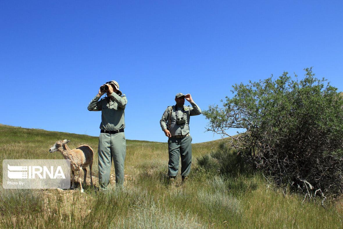 خبرنگاران پایش مناطق حفاظتی محیط زیست در سبزوار شدت یافت