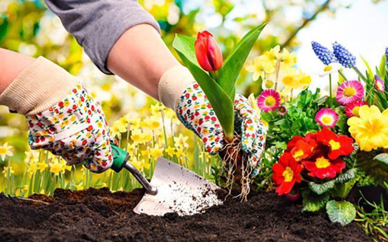 باغچه ای همواره سبز با گل های چهار فصل