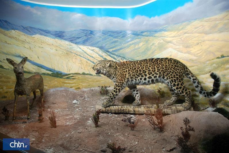 نمایش عظمت خالق زیبایی ها در موزه تاریخ طبیعی علی آباد کتول